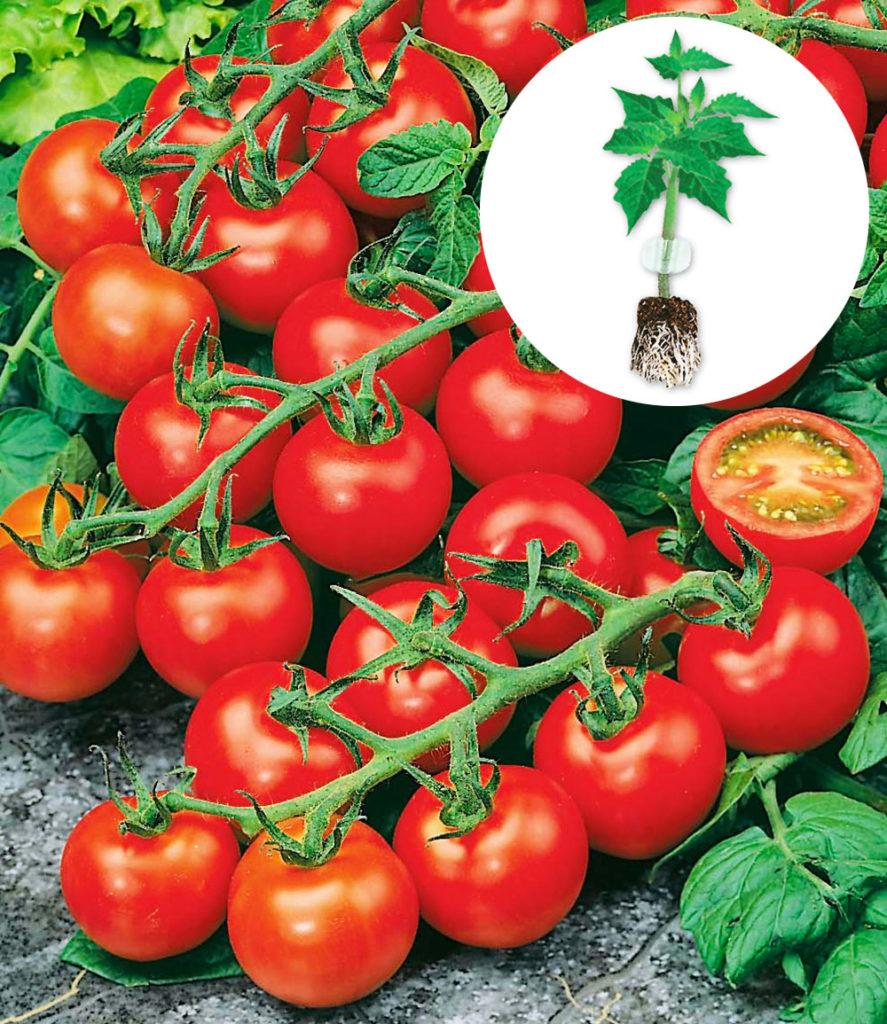 Geliebte Balkon-Tomaten & Co - Mein Nasch-Balkon #NU_29