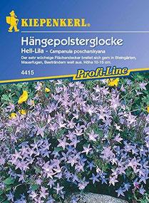 Glockenblume – Campanula poscharskyana